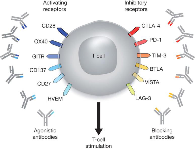 immune checkpoint inhibitors review 2017